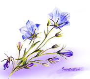 Watercolor painting of the bell flowers Stock Photography