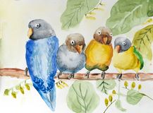 Watercolor painting of birds on branch stock images