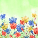 Watercolor painting. A bouquet of flowers of Blue,red poppies, wildflowers on a white isolated background. watercolor floral stock illustration