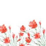 Watercolor painting. A bouquet of flowers of red poppies royalty free illustration