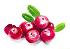 Red cranberries. Watercolor painting of a bunch of red cranberries Royalty Free Stock Photography