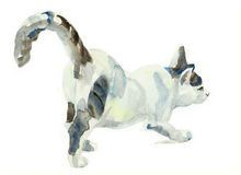 Watercolor painting cat stretching on surface. Watercolor painting cat stretching original watercolor painting pet life Royalty Free Stock Photography