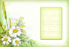 Watercolor painting of chamomile Stock Images