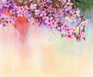 Watercolor Painting Cherry Blossoms, Japanese Cherry, Pink Sakura Royalty Free Stock Photography
