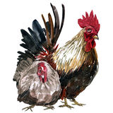 Watercolor painting chicken Animal Annual 2560/2017 Royalty Free Stock Photos
