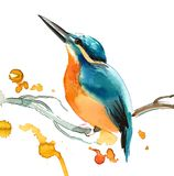 Watercolor bird Stock Images