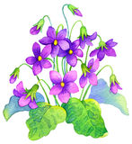 Watercolor painting. Delicate flowers bush forest violet Stock Photos