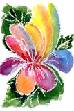 Watercolor painting of flowers. Watercolor  a multi-colored flower on a white background Royalty Free Stock Photo