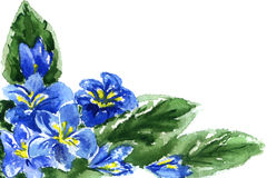 Watercolor painting of flowers. Watercolor  blue flowers on a white background Stock Images