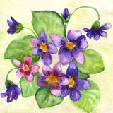 Watercolor painting of flowers. Watercolor  blue flowers on a green background Royalty Free Stock Images