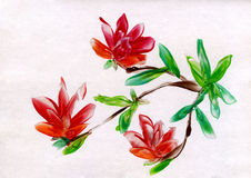 Watercolor painting of flowers. Red flowerses on white background Royalty Free Stock Photos