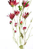 Watercolor painting of flowers. Use as background Royalty Free Stock Images