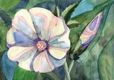 Watercolor painting flowers. Watercolor painting beautiful flowers garden bindweed morning glory Royalty Free Illustration