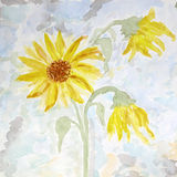 Watercolor painting of flowers sunflower,  card Royalty Free Stock Photo