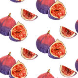Watercolor painting of fruit fig Stock Photo