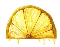 Watercolor painting fruit lemon slice on white background Royalty Free Stock Images