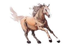 Watercolor painting of galloping horse, free running mustang aquarelle.  Stock Photography