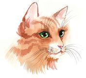Ginger cat. Watercolor painting of a ginger colored cat head with a green eyes Stock Photos