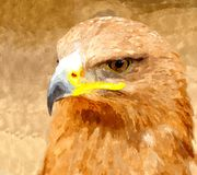 Watercolor painting of Golden Eagle Royalty Free Stock Photo