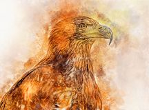 Watercolor  painting of the Golden Eagle port. Watercolor digitally generated painting of the Golden Eagle portrait Stock Image