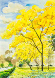 Watercolor painting golden tree flowers in sky and cloud  background Royalty Free Stock Photography