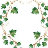 Watercolor painting of green ivy leaves isolated on a white background. Watercolor hand painted illustration. Green pattern of cli. Mbing branches and green stock illustration