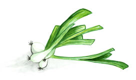 Watercolor painting of green leek on white background Stock Photography