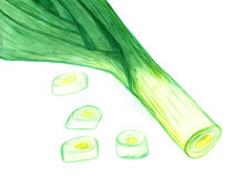 Watercolor painting of green leek on white background Royalty Free Stock Photo