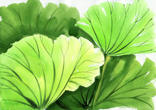 Watercolor painting of green lotus leaves Stock Image