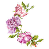 Watercolor painting Greeting cards. Rose background, watercolor composition. Flower backdrop. Isolated illustration on. Watercolor painting Greeting cards. Rose Royalty Free Stock Photo
