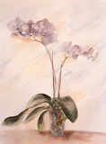 Watercolor painting of growing orchid. Watercolor hand painting of growing indoors orchid in blooms Stock Image