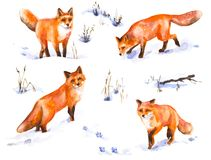 Red Fox Watercolor Sketch. Watercolor painting.  Hand drawn  animalistic illustration. Red fox set. Aquarelle  sketch of wild  predator motion.  Winter scene Royalty Free Stock Photos