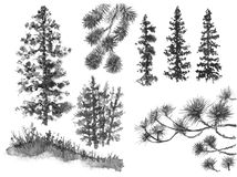 Watercolor  Silhouettes  of Conifers. Watercolor painting. Hand drawn illustration. Set of silhouettes conifers isolated on white. Evergreen trees branches Stock Image
