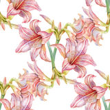 Watercolor painting of leaf and flowers, seamless pattern Royalty Free Stock Image