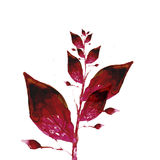 Watercolor painting of  leaves Stock Images