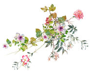 Watercolor painting leaves and flower, on white background Stock Photo