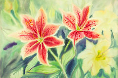Watercolor painting with Lilly flowers. Stock Photography