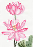 Watercolor painting of lotus flower Stock Photo