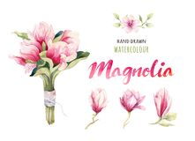 Watercolor Painting Magnolia blossom flower wallpaper decoration Stock Photos