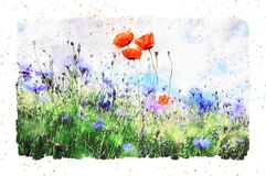 Free Watercolor Painting Of Poppy Flower And Corn Flower Blossom In Summer Time. Frame With Dots Stock Images - 178197744