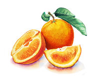 Watercolor painting with orange fruits Stock Image