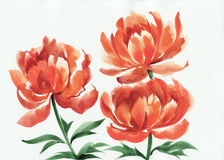 Watercolor painting of orange poppies Royalty Free Stock Images