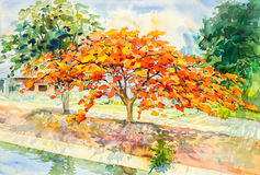Watercolor painting orange red tree flowers in sky and cloud Stock Image