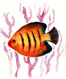 Tropical fish and corals. Watercolor painting of a orange with stripes tropical fish and corals Royalty Free Stock Images