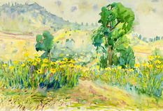 Watercolor painting Original landscape colorful of flowers fields in garden. Watercolor painting original landscape colorful of flowers fields in mountain and Stock Image