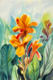 Watercolor painting original landscape orange color of Canna lily flowers. royalty free illustration