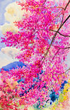 Watercolor painting original landscape of  wild himalayan cherry Stock Photo