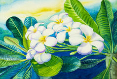 Watercolor painting original on paper colorful of white plumeria flowers. Stock Photography