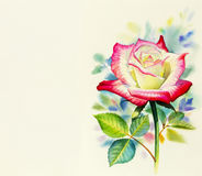 Watercolor painting original realistic happy postcard  colorful flower of roses Stock Image