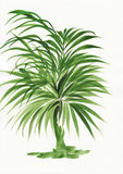 Watercolor painting of palm bamboo Stock Photo